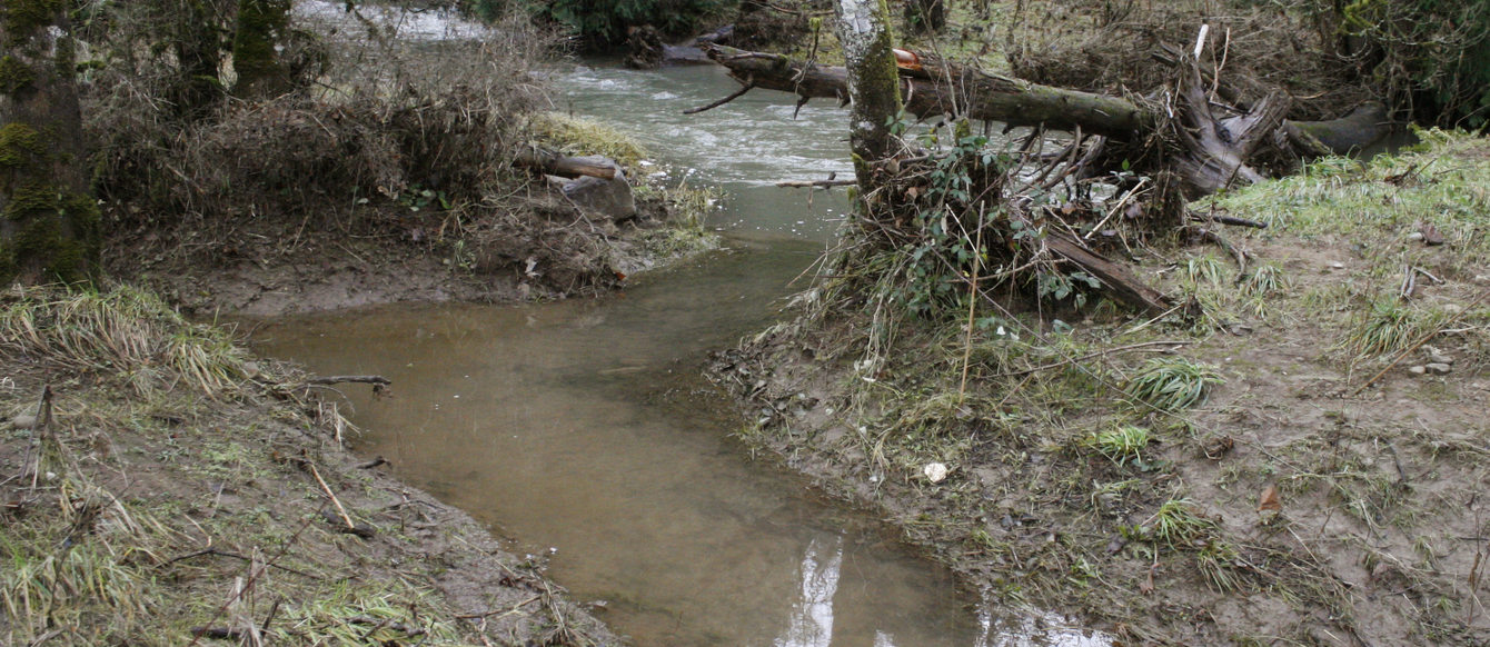 Photo of a side channel and log jam at Johnson Creek