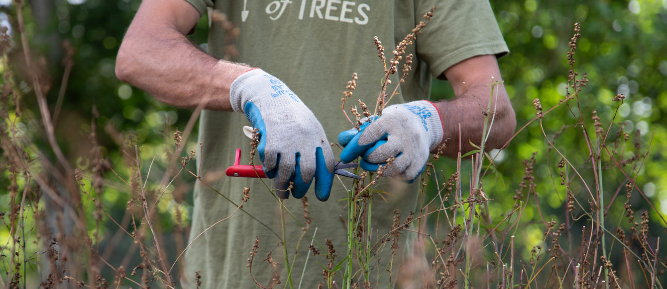 Friends of trees volunteer clipping weeds.