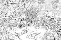 Baker Creek illustration by Zoe Keller