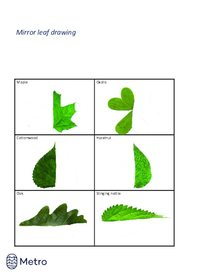 Mirror leaf drawing - with outlines