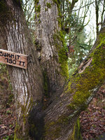 photo of the summit sign at Mount Talbert Nature Park