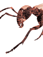 graphic of an ant