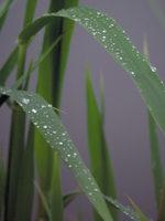 photo of dewy grass