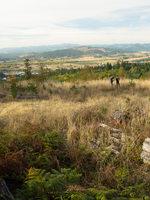 photo of view from Chehalem Ridge