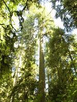 photo of mossy trees at Oxbow Regional Park