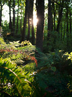 photo of ferns at Newell Creek Canyon