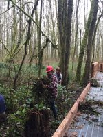 photo of Northwest Youth Corps pulling ivy at Dirksen Nature Park
