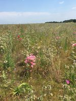 photo of St. Johns Prairie wildflowers