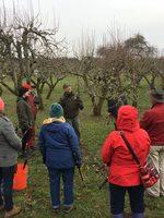 Fruit tree pruning at Howell Territorial Park historic orchard with Metro Arborist, Howard Rasmussen