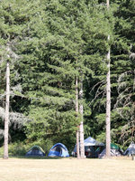 camp tents set up in the forest campground