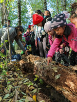 kids hovered over log looking for insects