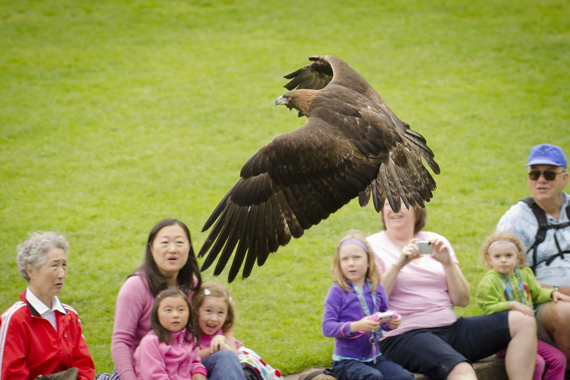 photo of a hawk at Wildlife Live!