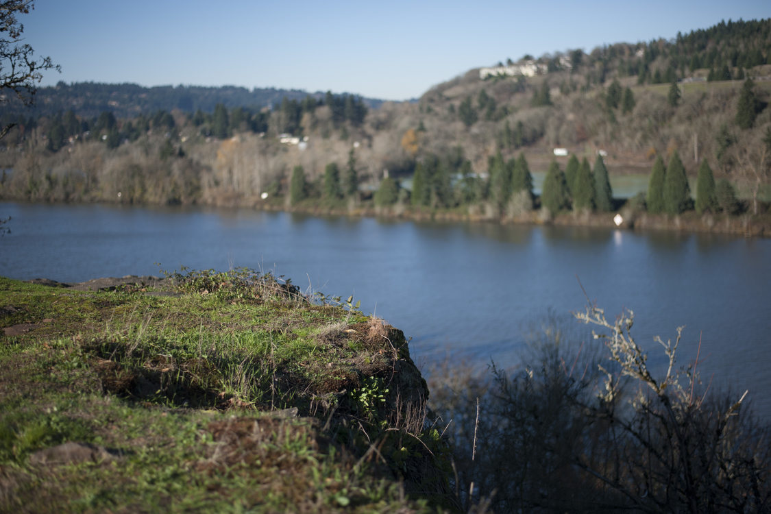 photo of the Willamette River from Canemah Bluff