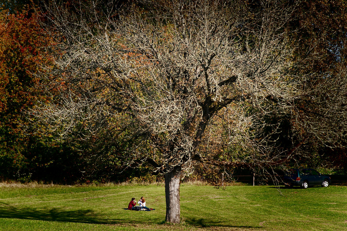 photo of a couple having a picnic under a tree at Howell Territorial Park
