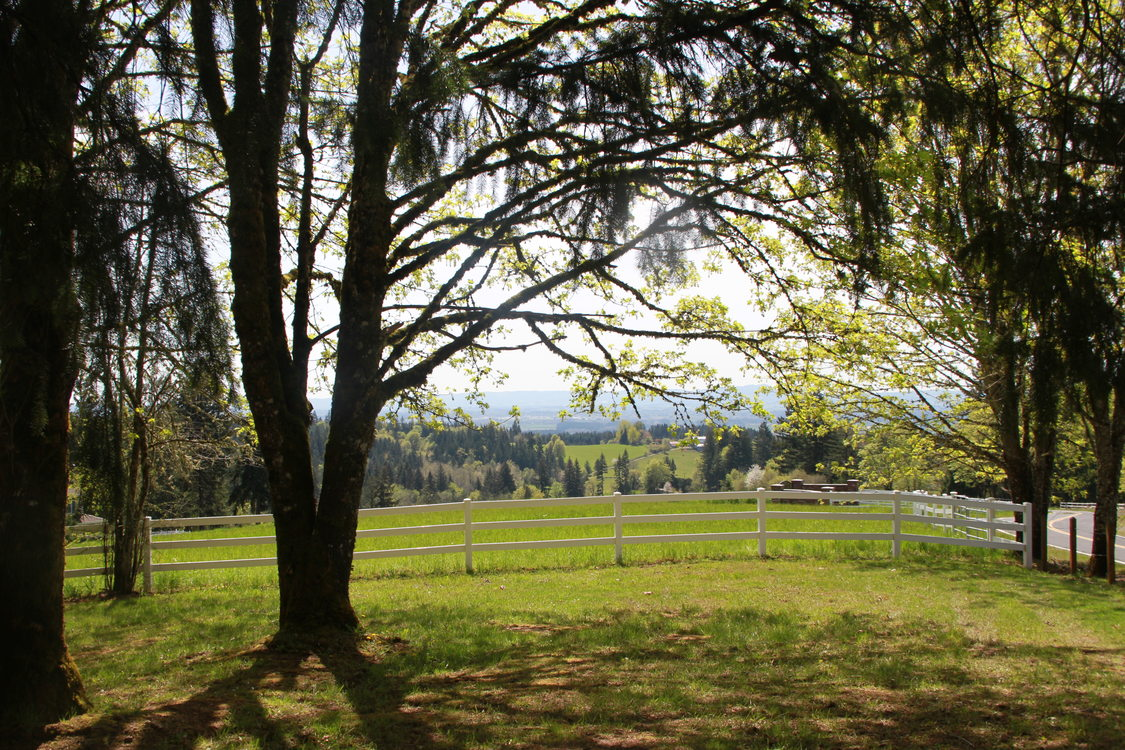 photo of trees and the fenceline at Mason Hill Park