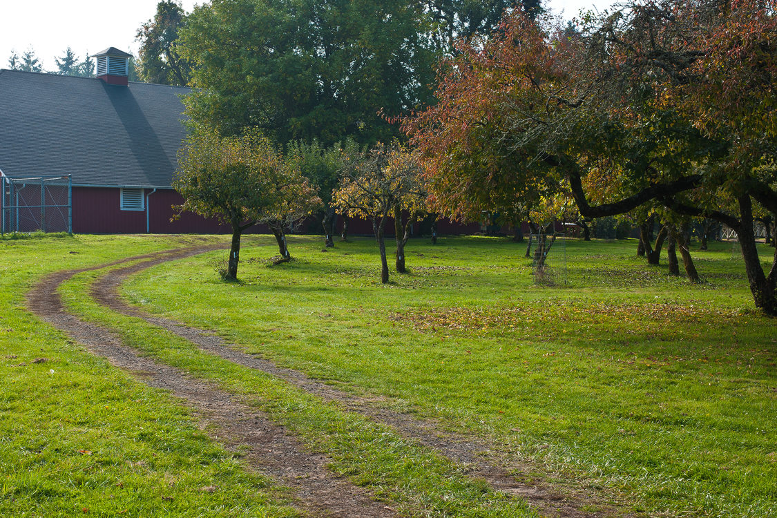 photo of the orchard and barn at Howell Territorial Park