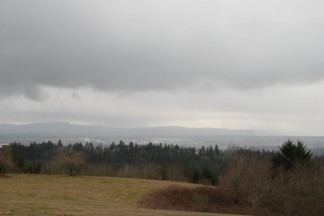 photo of North Tualatin Mountains natural area on a cloudy day