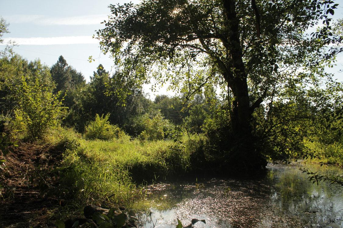 photo of Johnson Creek restoration work