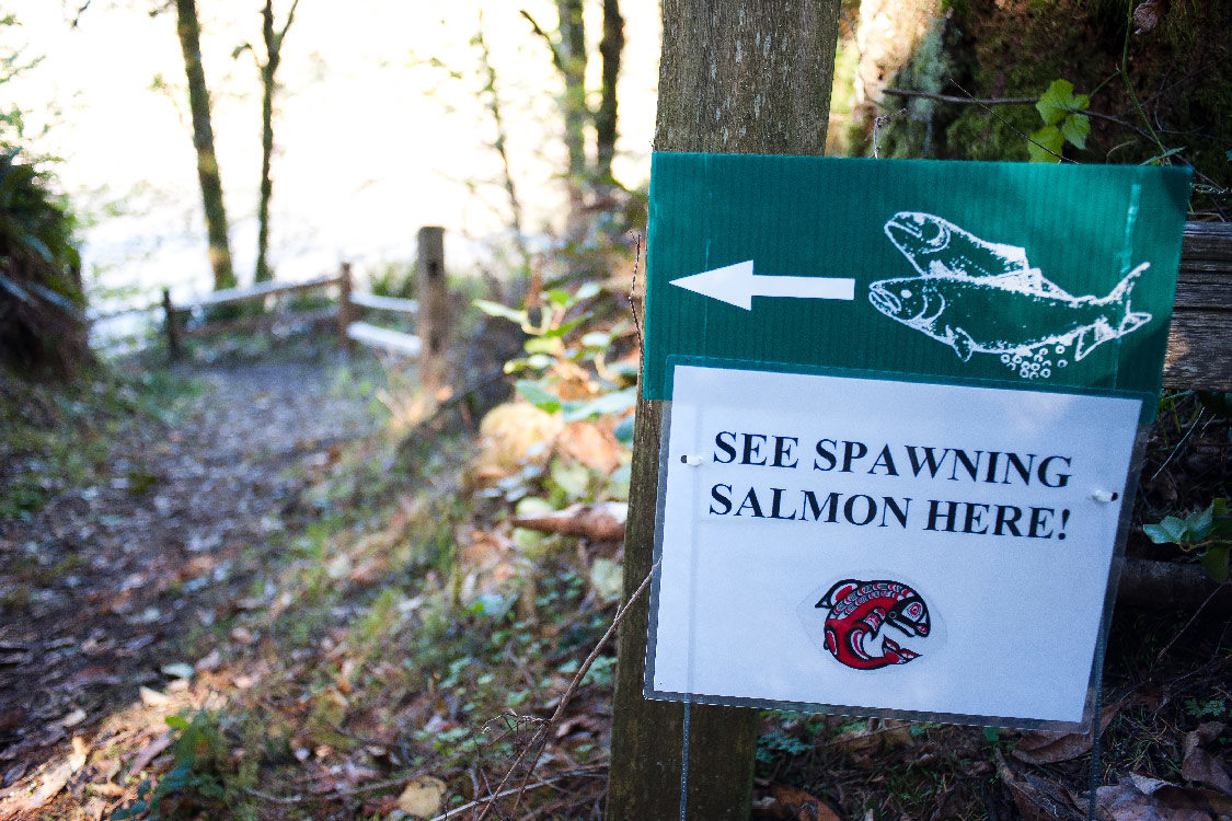 Salmon spawning sign at Oxbow Park