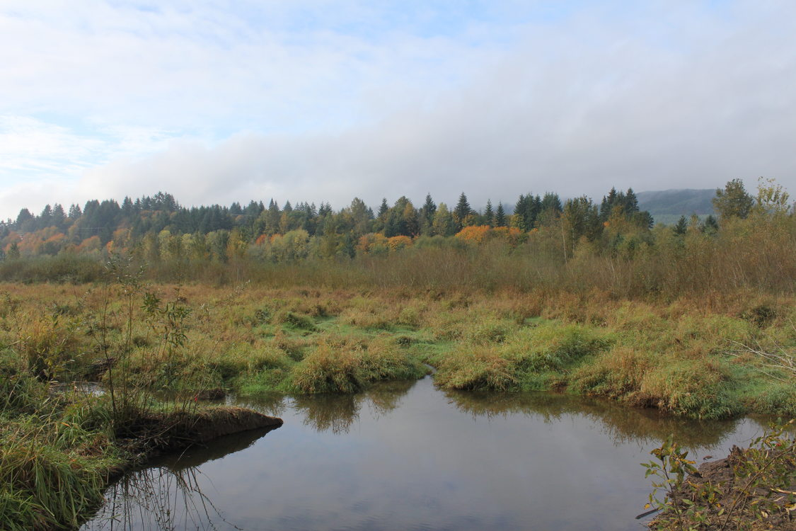 photo of Multnomah Channel Marsh