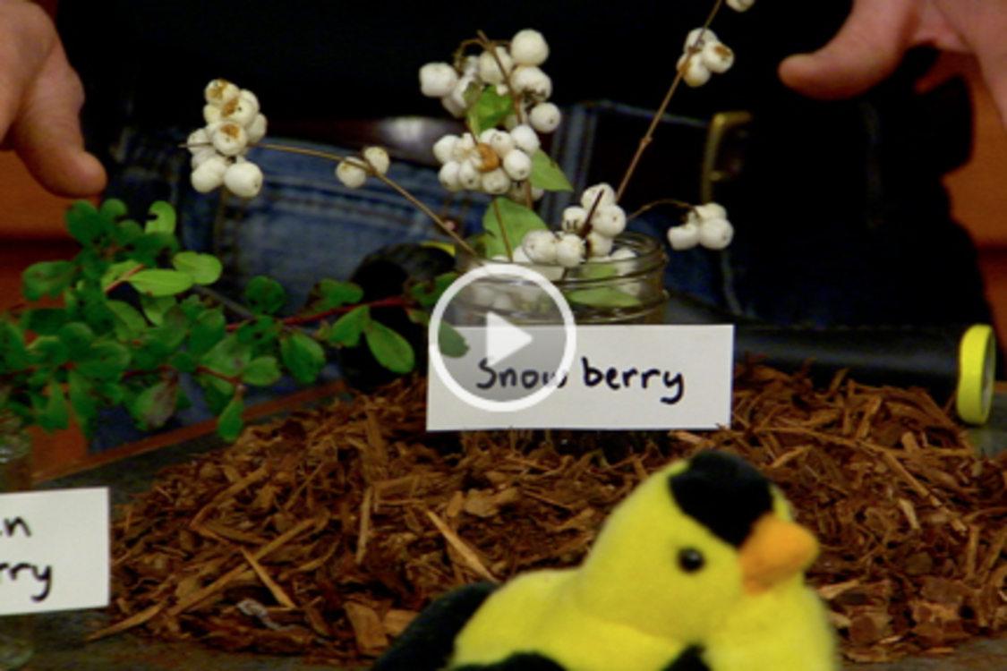 screenshot of AMNW video