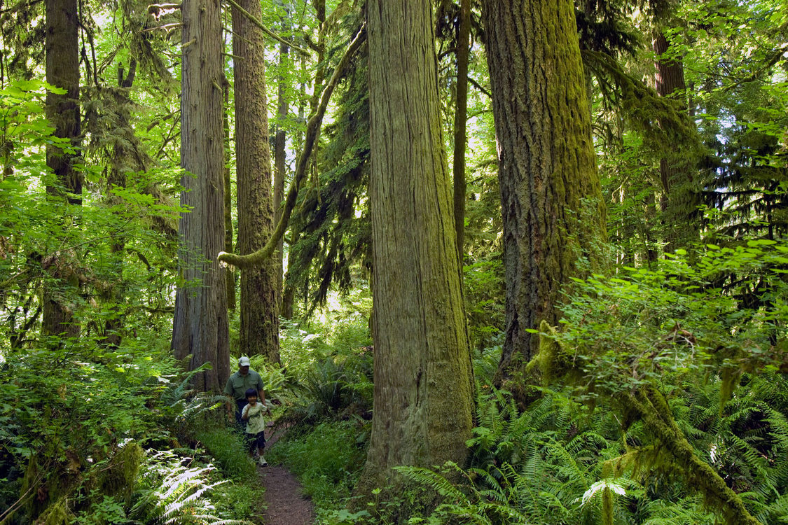Man and boy hiking in the ancient forest at Oxbow