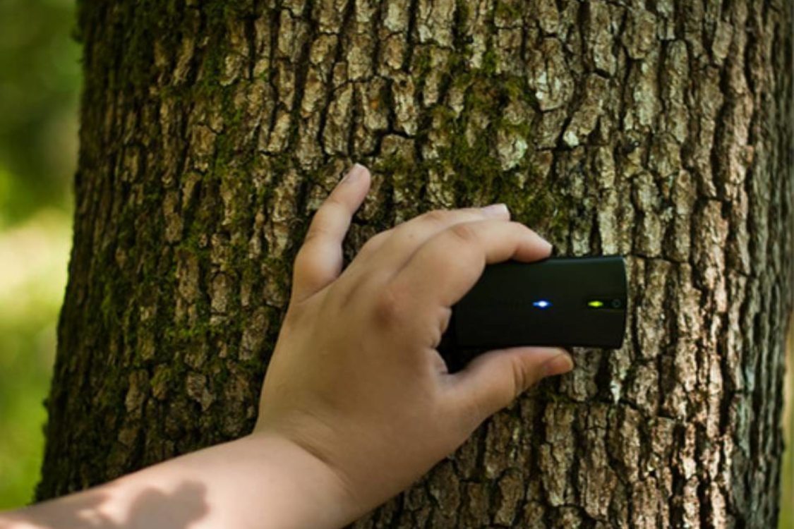 person using an electronic measuring device on the trunk of an oak tree