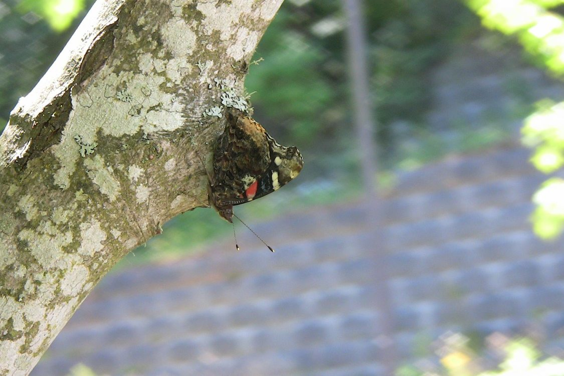 photo of butterfly on the trunk of a tree