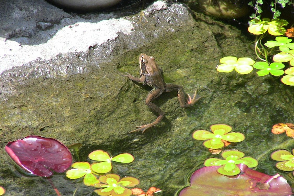 photo of frog in pond