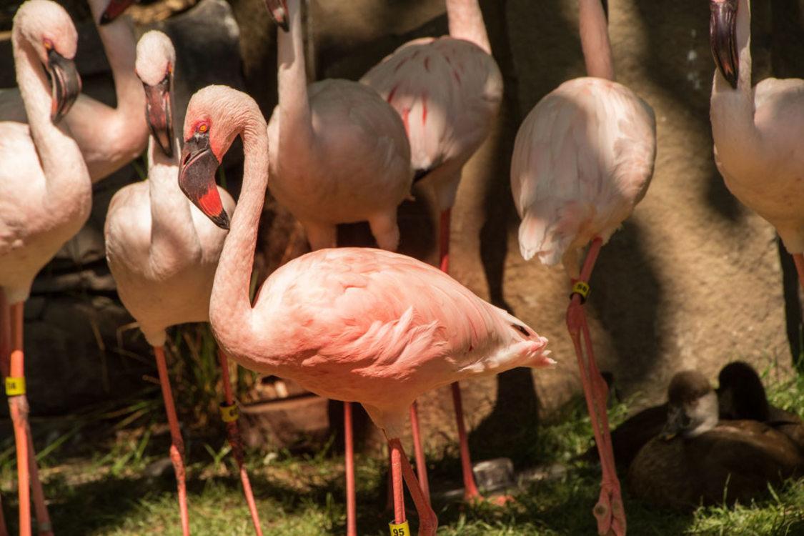 photo of Big Pink the flamingo