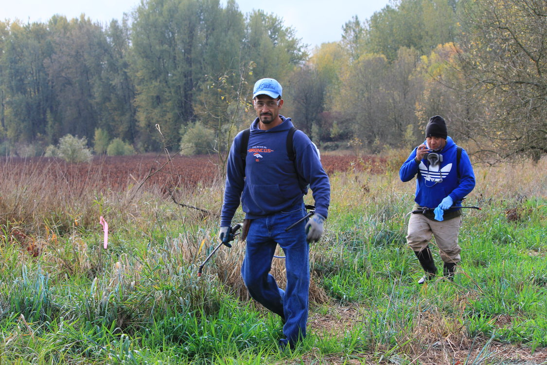 photo of Verde restoration crews at Smith and Bybee Wetlands Natural Area