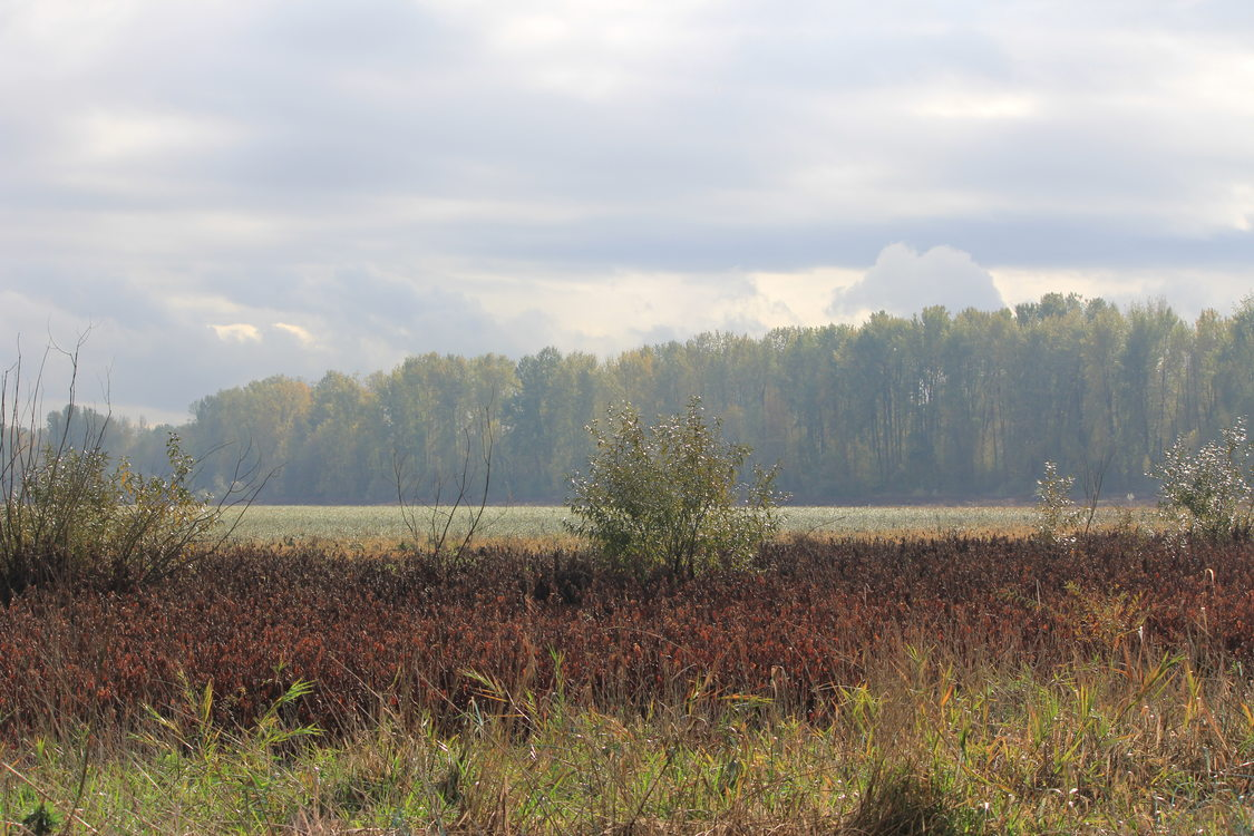 photo of Smith and Bybee Wetlands