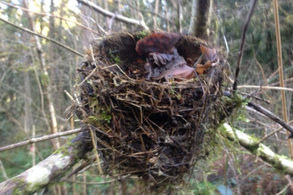 photo of robin's nest along the North Fork of Deep Creek.