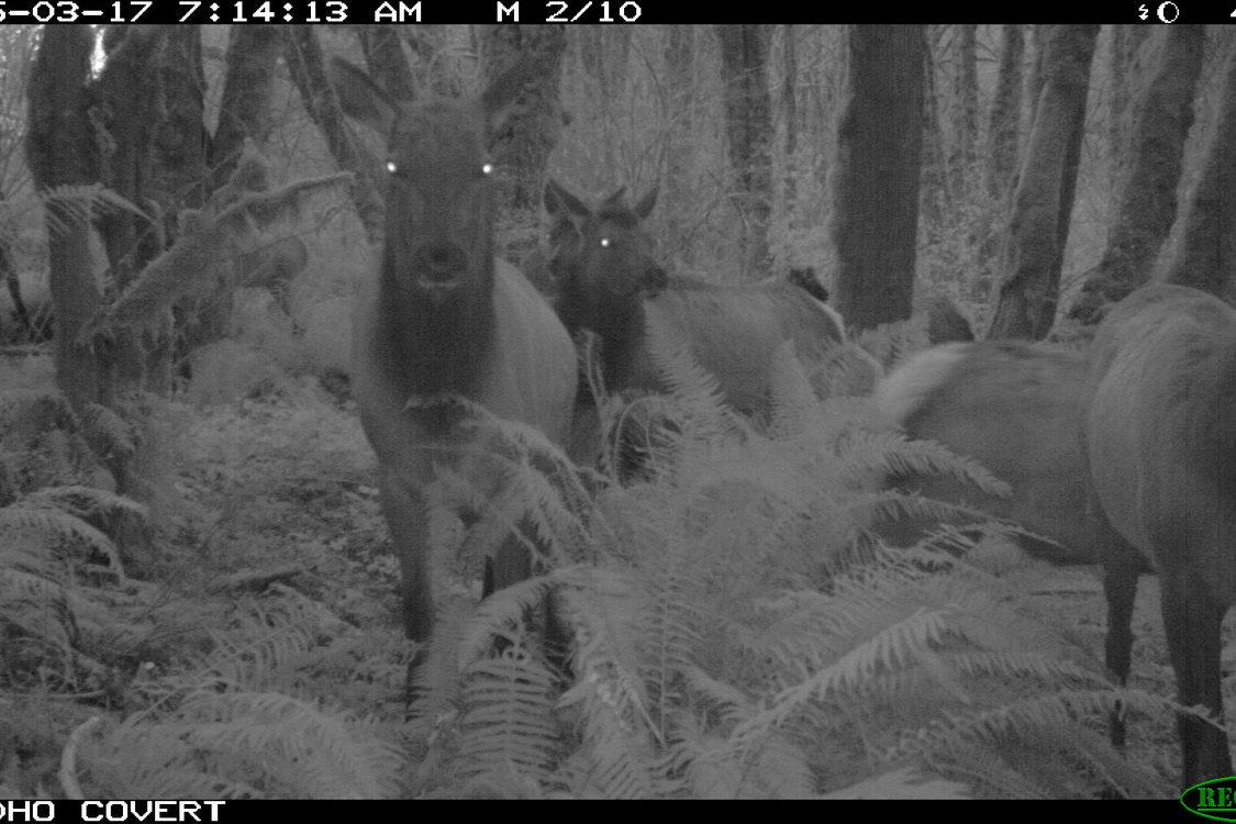 photo of elk at Killin Wetlands Natural Area