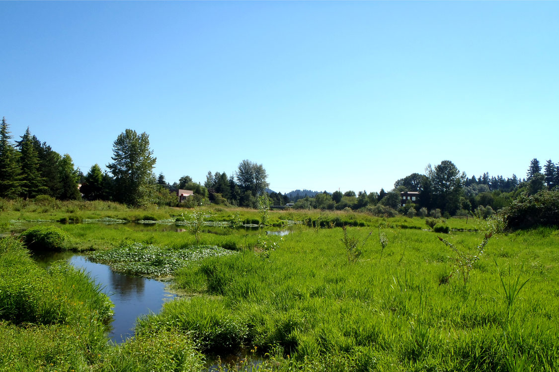 photo of The Wetlands Conservancy's Nyberg Wetland Preserve