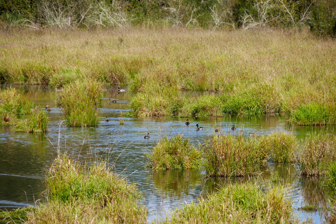 photo of birds in the Killin Wetlands Natural Area