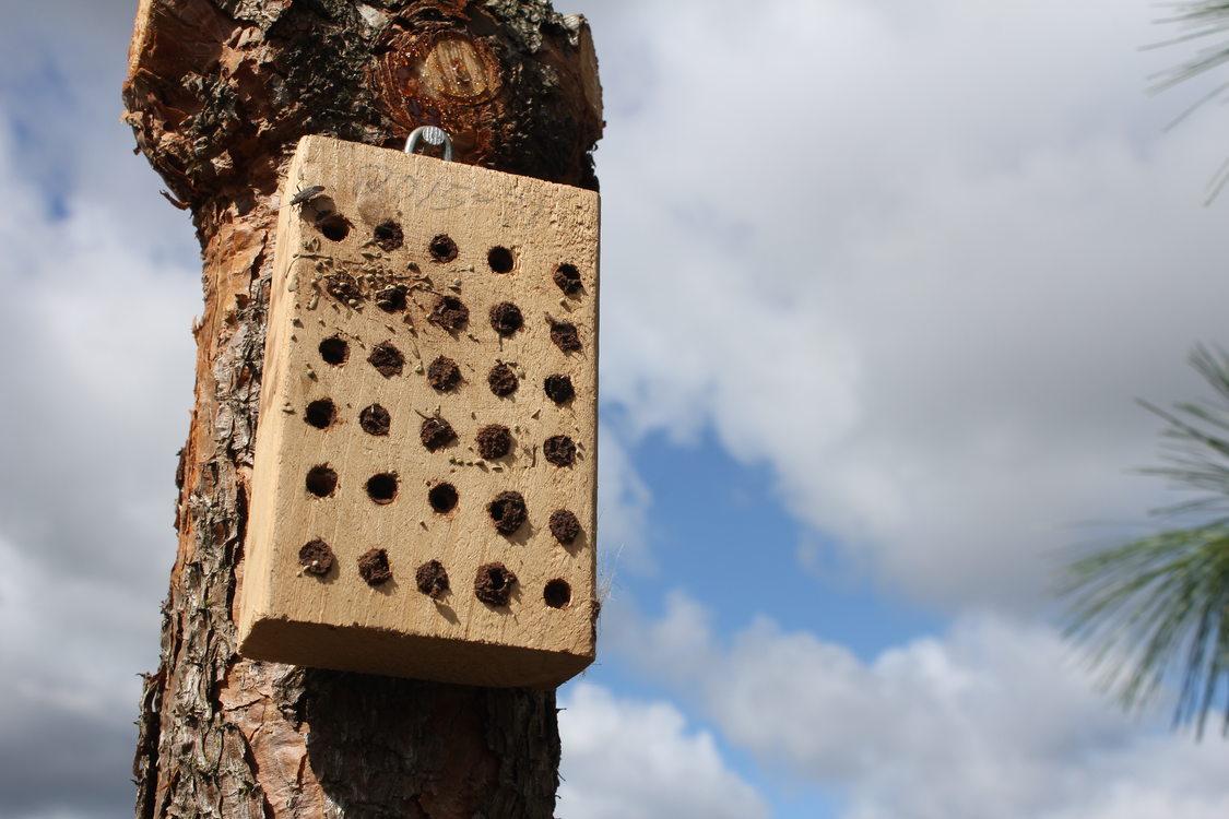 photo of filled mason bee boxes at Graham Oaks