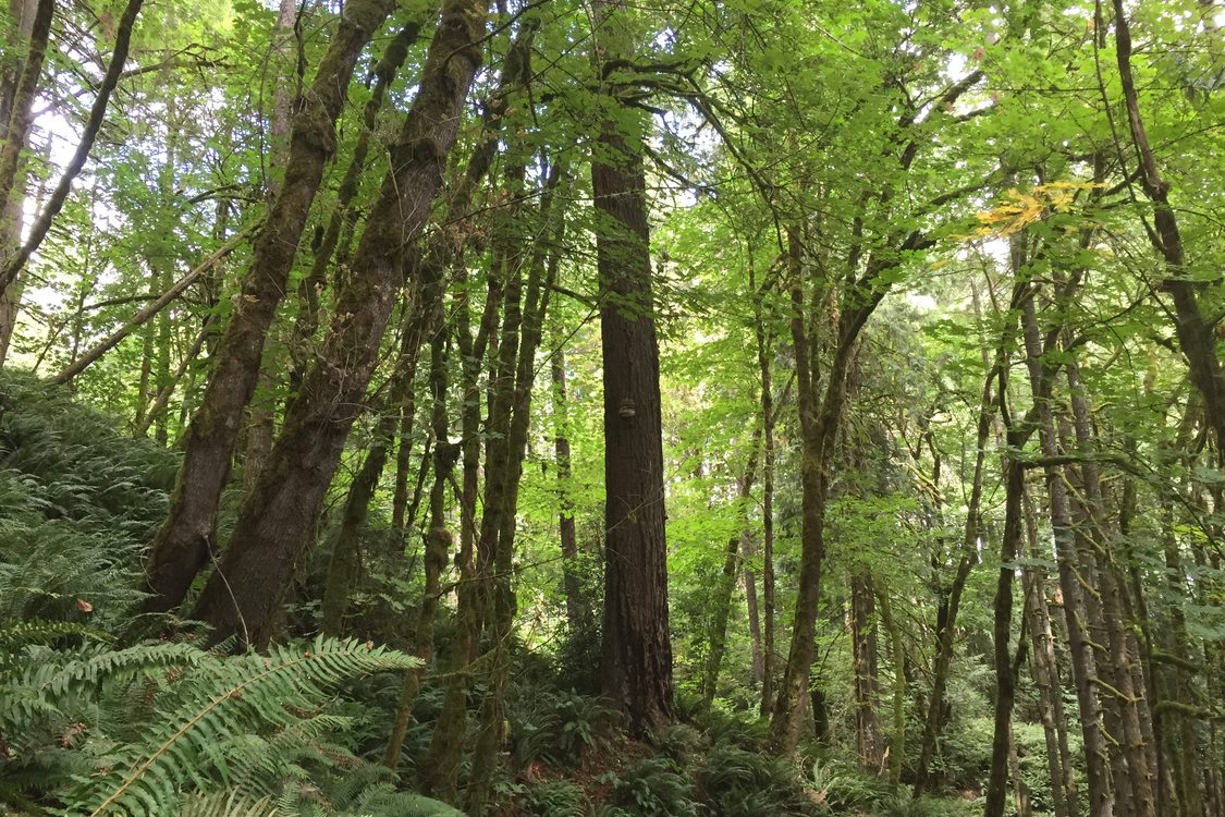 photo of Baker Creek Woods