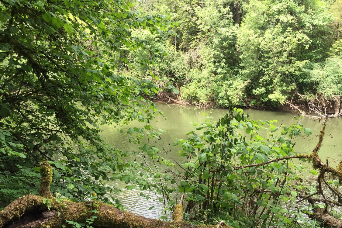 Metro acquires 51 acre property along tualatin river to for Tualatin river fishing