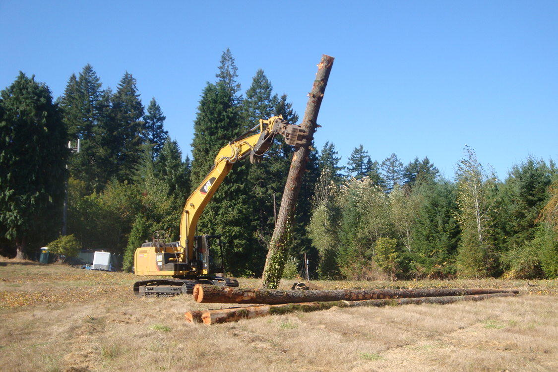 photo of snag created at Willamette Narrows Natural Area