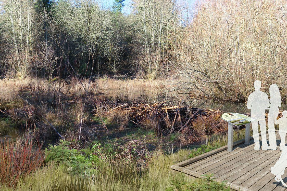 rendering of wetlands overlook at Chehalem Ridge Nature Park