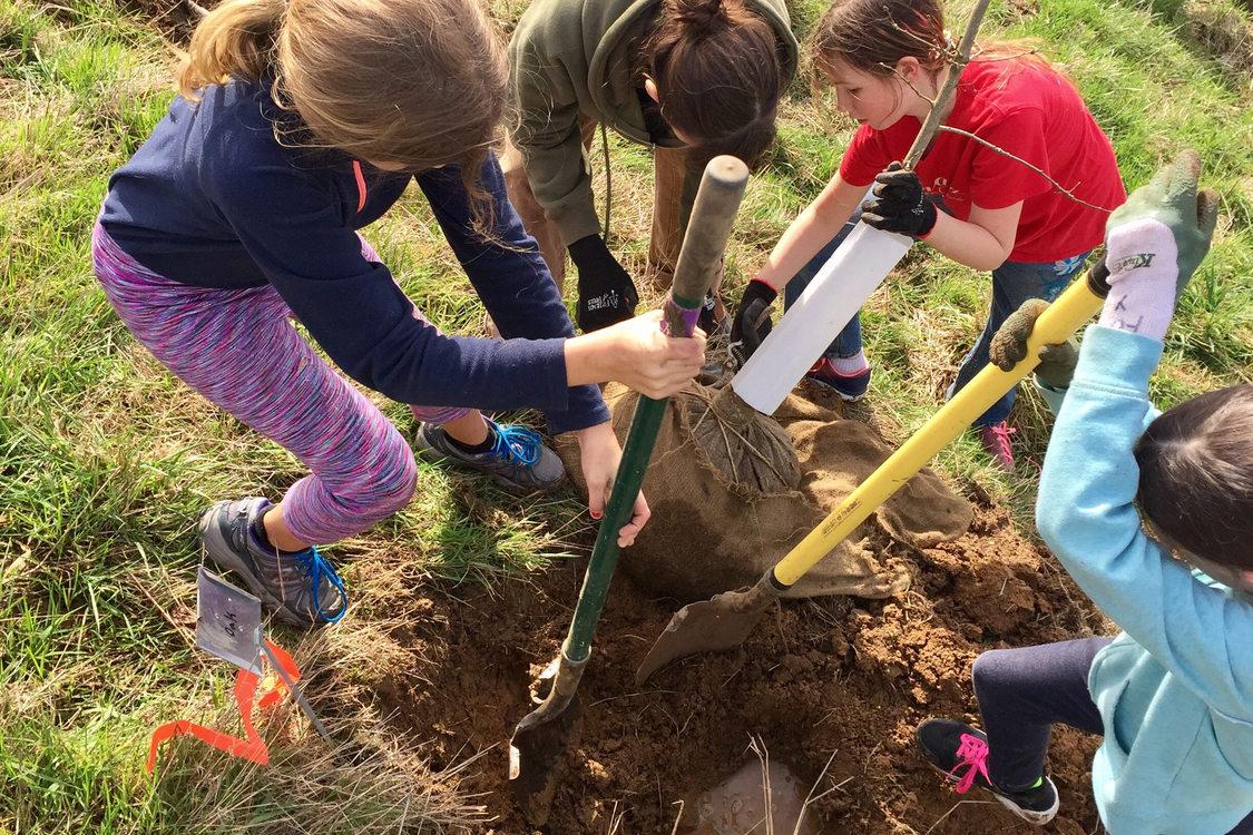 kids plant a tree