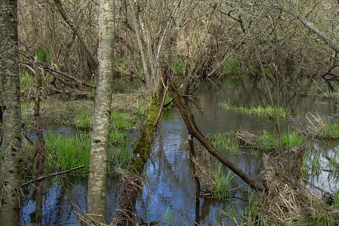 photo of East Council Creek