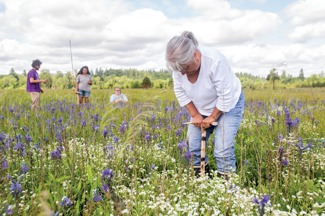 photo of Louise Wilmes harvesting camas bulbs at Quamash Prarie
