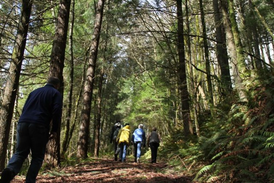 a photo of people hiking beneath a heavy tree canopy