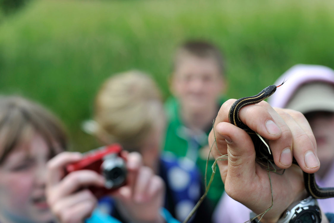 person holding garter snake in hand while children in background observe and take photos