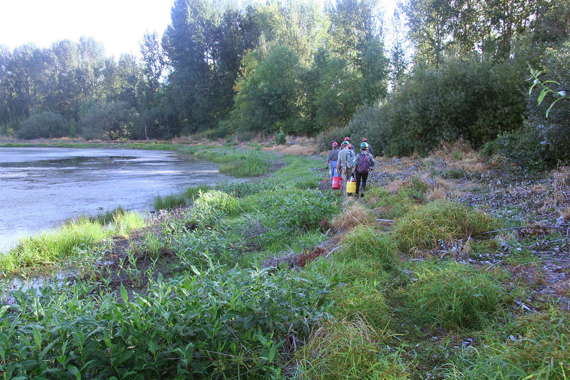 members of a Northwest Youth Corp crew walk along the banks of Ramsey Lake in North Portland