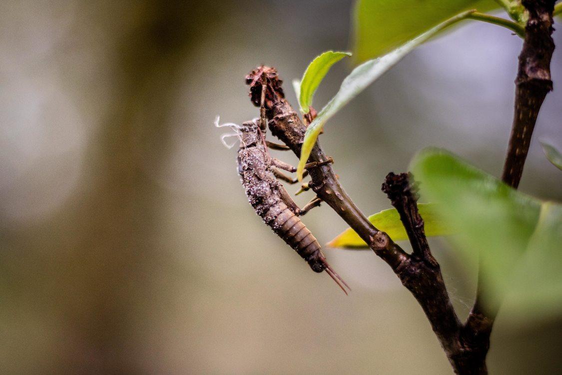 photo of stonefly at Oxbow Regional Park