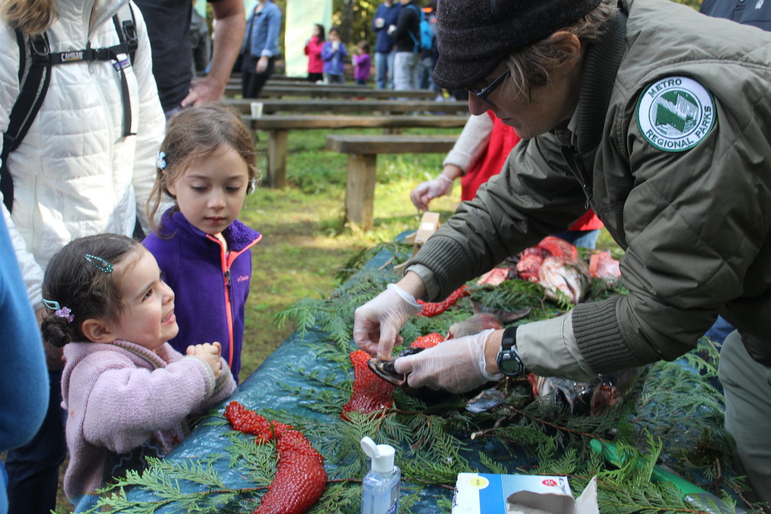photo of Salmon Homecoming at Oxbow Regional Park