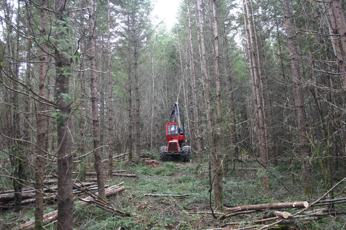 photo of thinning at Chehalem Ridge Natural Area